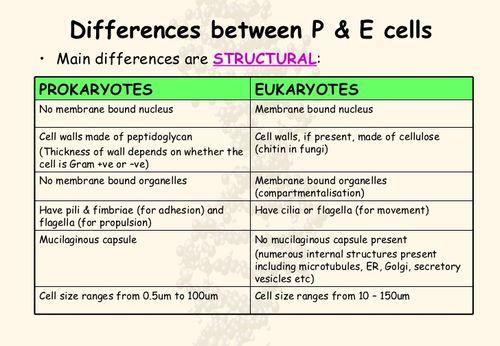 Prokaryotes-vs-eukaryotes-25-728